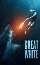 Beyaz Köpekbalığı